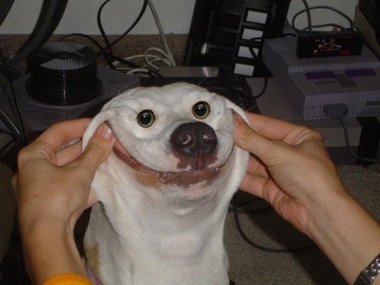 dog smile meme