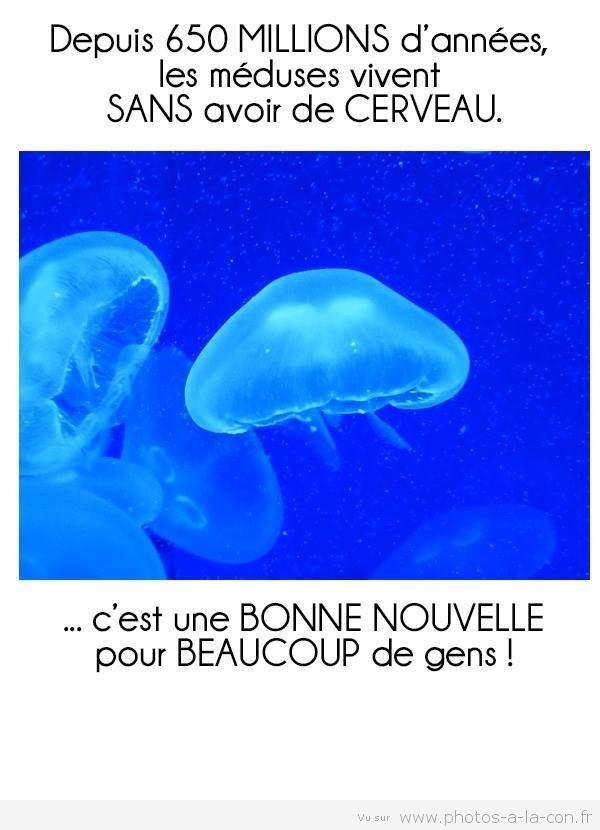 j'en connais qui sont des méduses