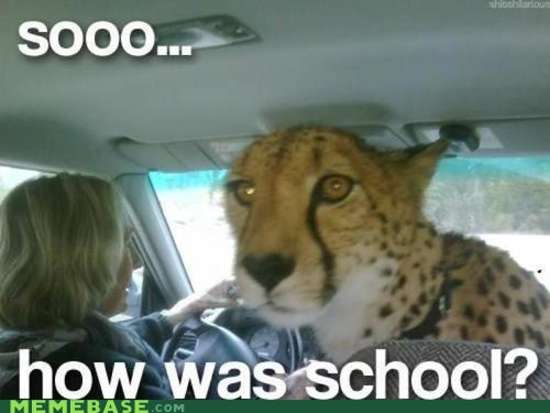 Cheetah Mom Meme By Zacattack2396 Memedroid