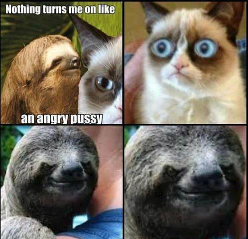 Pedo sloth strikes! - Meme by waffles265 :) Memedroid