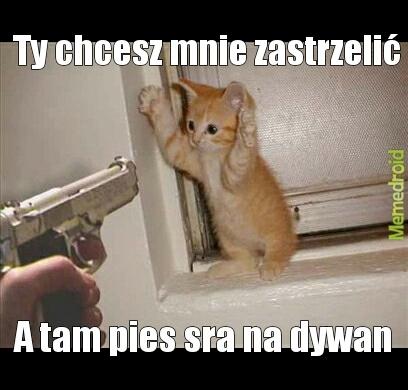 Kot Meme By Th3b3ast Memedroid