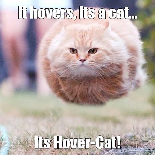 hover cat meme by kaibrusa17 memedroid