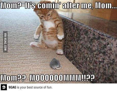 Confused Cat Meme By Celix Memedroid