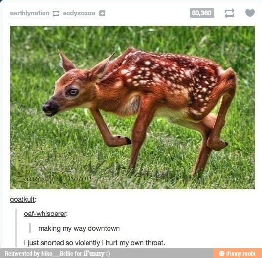 Oh Deer Meme By Bertnast Memedroid