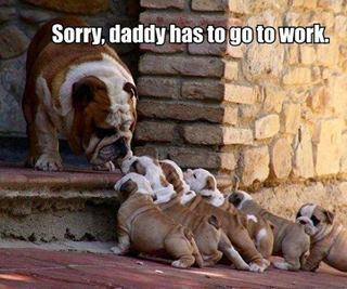 cute puppys must say goodbye
