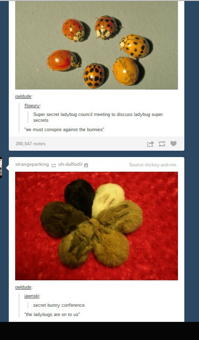Super Secret Lady Bug And Bunny Meetings Meme By Bookworm00981