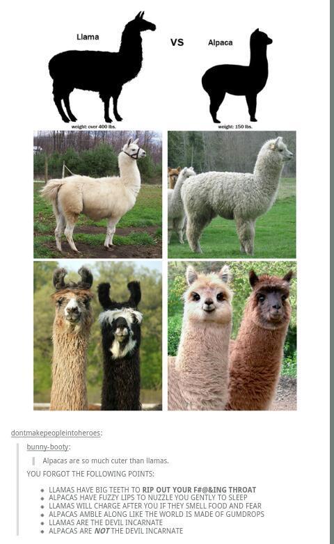 Alpaca Ur Bags Sorry Meme By Whatdowehavehere Memedroid