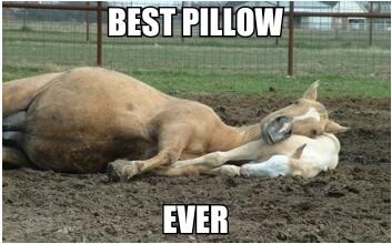 Even Horse Moms Need A Break Meme By Elleloup525 Memedroid