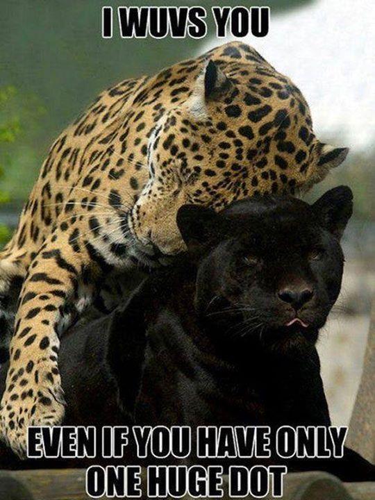 Dawwwww Cheetah Love Meme By Bajeewa Memedroid