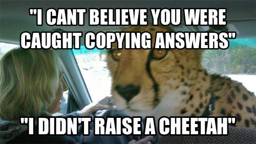 Man You Are Such A Cheetah Meme By Xxredsaberxx Memedroid