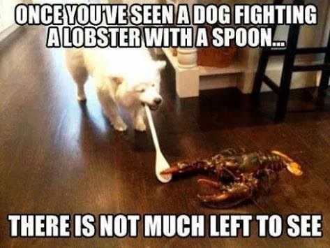 Dog vs lobster round 1 fight!!! - Meme by nikobellic4564