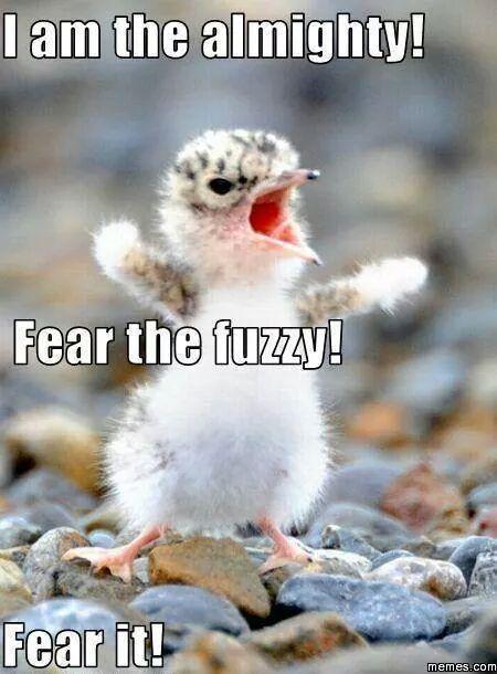 Fear The Fuzzy Meme By Yinsuneku Memedroid