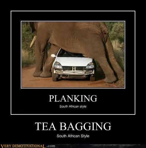 teabagging - meme