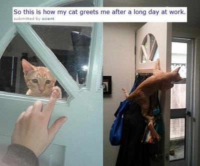 Cat FTW - meme
