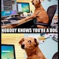 I'm a dog.