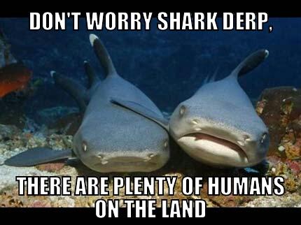 shark derp - meme