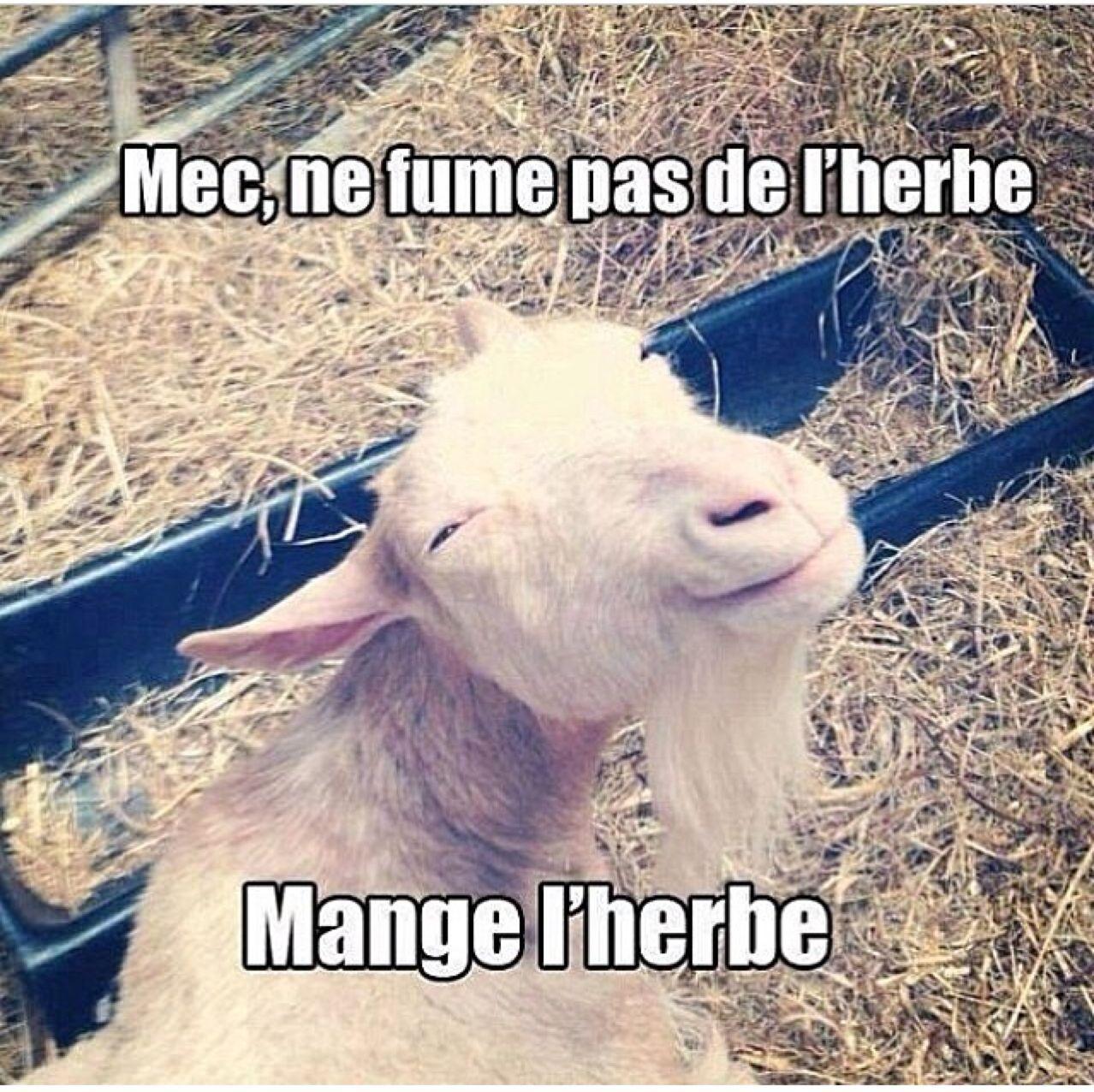 L herbe - meme