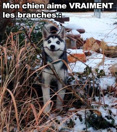 J'aime Les Branches !! - meme