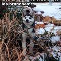 J'aime Les Branches !!