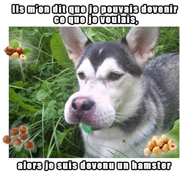 le chien vit son rêve - meme