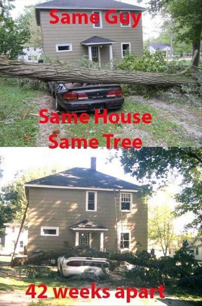 misma casa , mismo hombre y mismo arbol (siganme) - meme