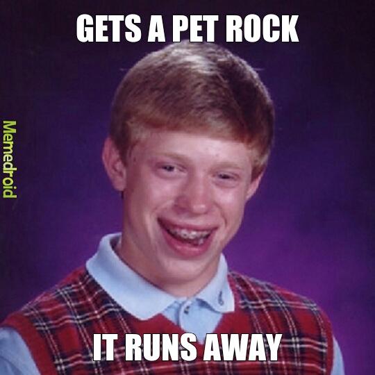Pet rock runs away - meme
