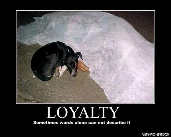 508ca9670e6a7 loyalty meme by mamen009 ) memedroid