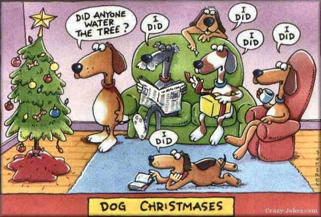 Dog Christmas Meme.Dog Christmas Meme By Sammycatcher Memedroid