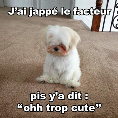 Ohhh le petit chien - meme