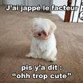 Ohhh le petit chien