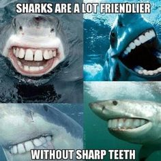 Having FUN with sharks - meme