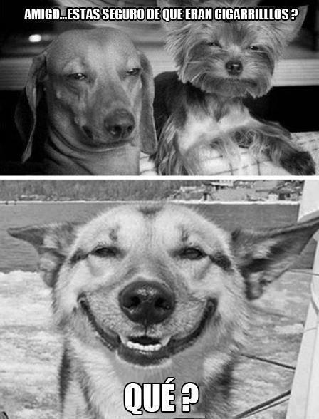 stone dog - meme