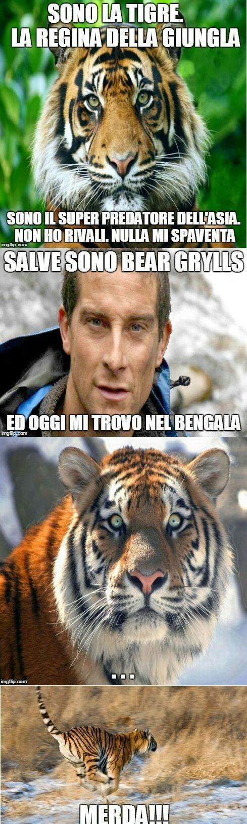 tigre vs grotta - meme