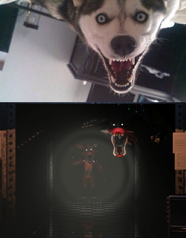 I saw this dog pic the other day, and all I could think of was this - meme