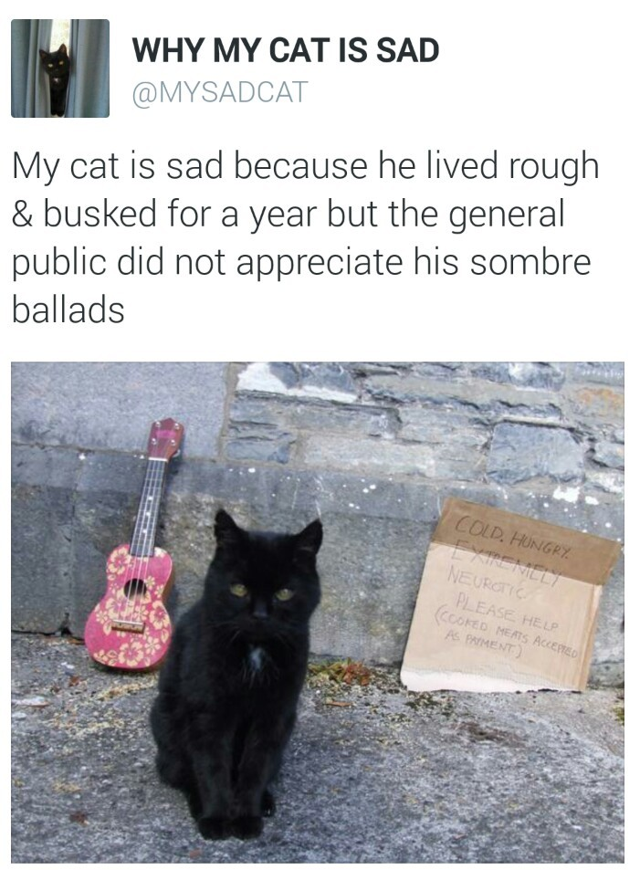 my cat is sad - meme