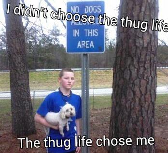 thug life......awwwww yeaaaaaaah - meme