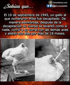 Mike El pollo sin cabeza - meme
