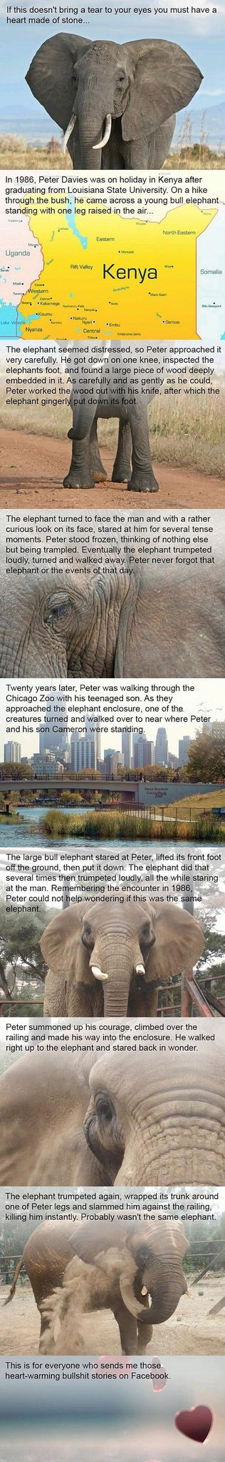 This elephant has never forgot. - meme
