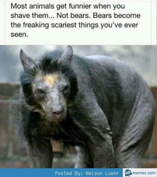 Hairless bears - meme