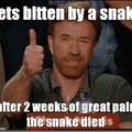 poor snake