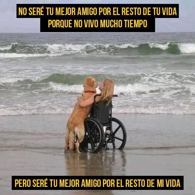 Bravoo!!!  :¨) - meme