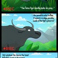 The Peaceful Water Buffalo