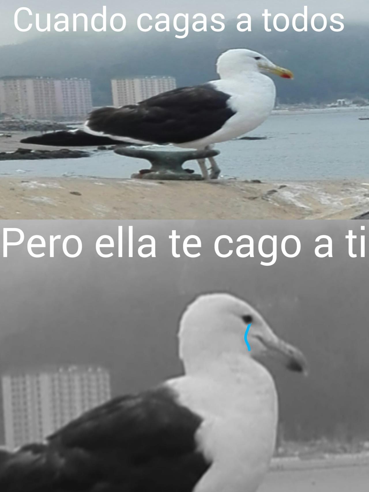 :´v - meme