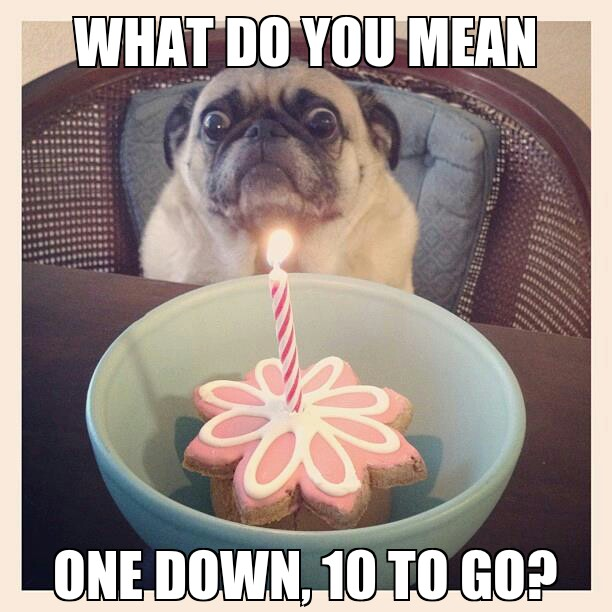 Party Pooper Pug - meme