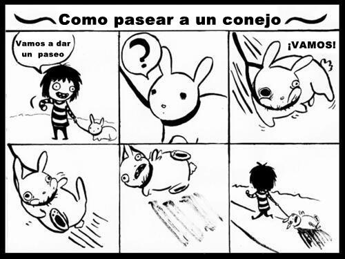 Asi se pasea un conejo - meme