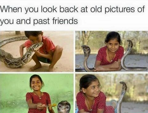 Snakes - meme