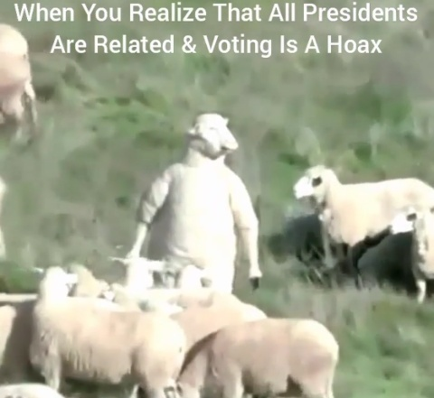 Stand Up Sheep. - meme