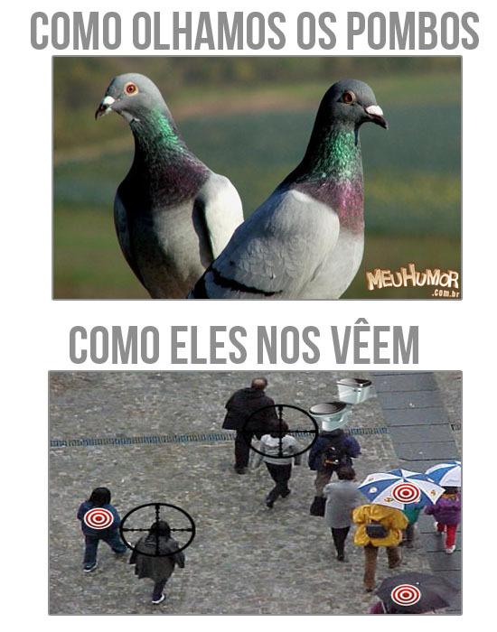 Seção pombos #1 - meme