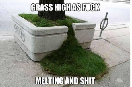 baked grass - meme