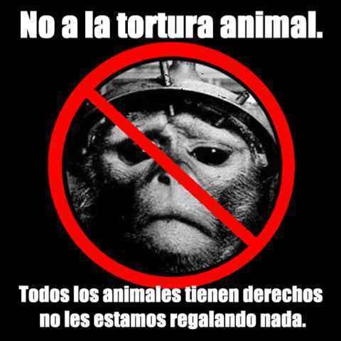 Da like si estas en contra del maltrato animal - meme